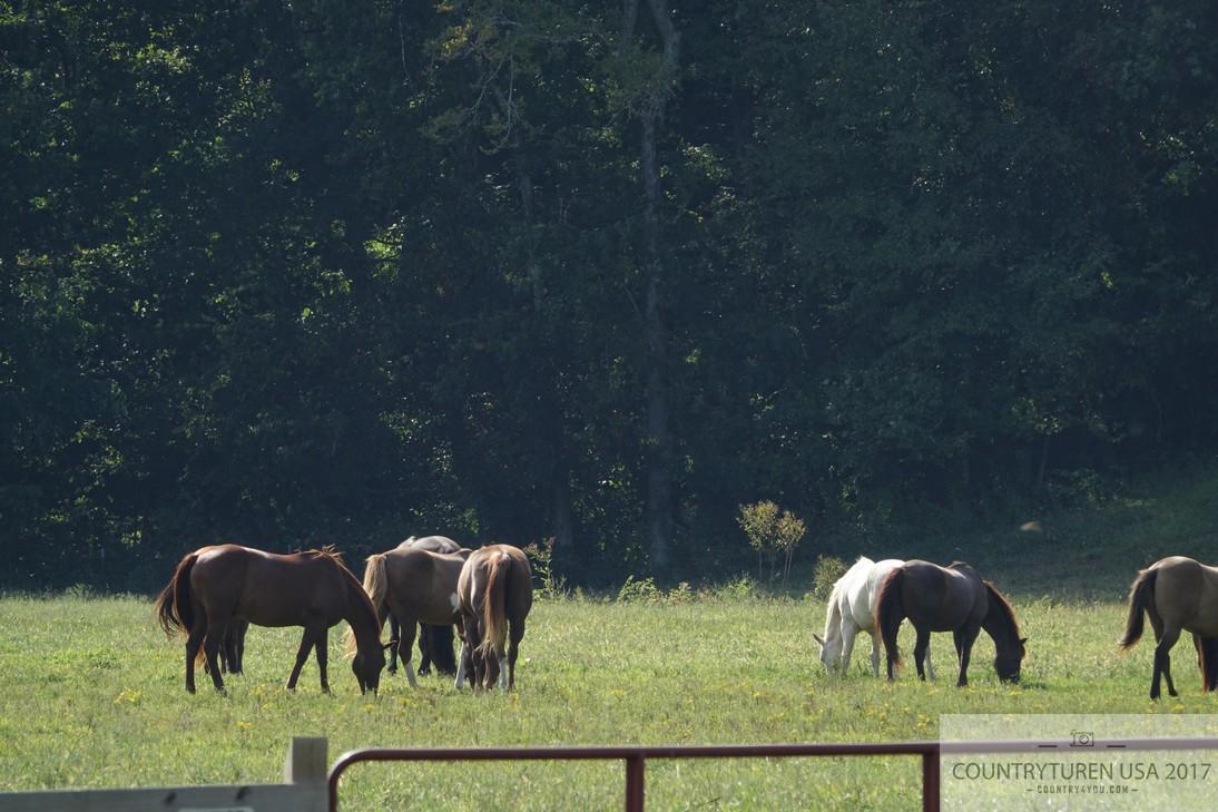 Loretta Lynn Ranch